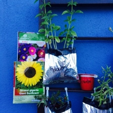 Ejemplos de plantas que son buenas para las abejas.