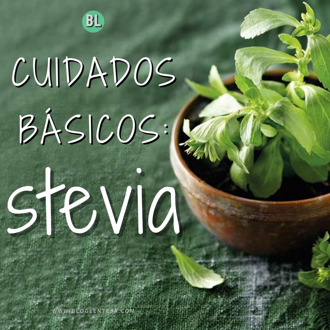 Cuidados básicos: Stevia