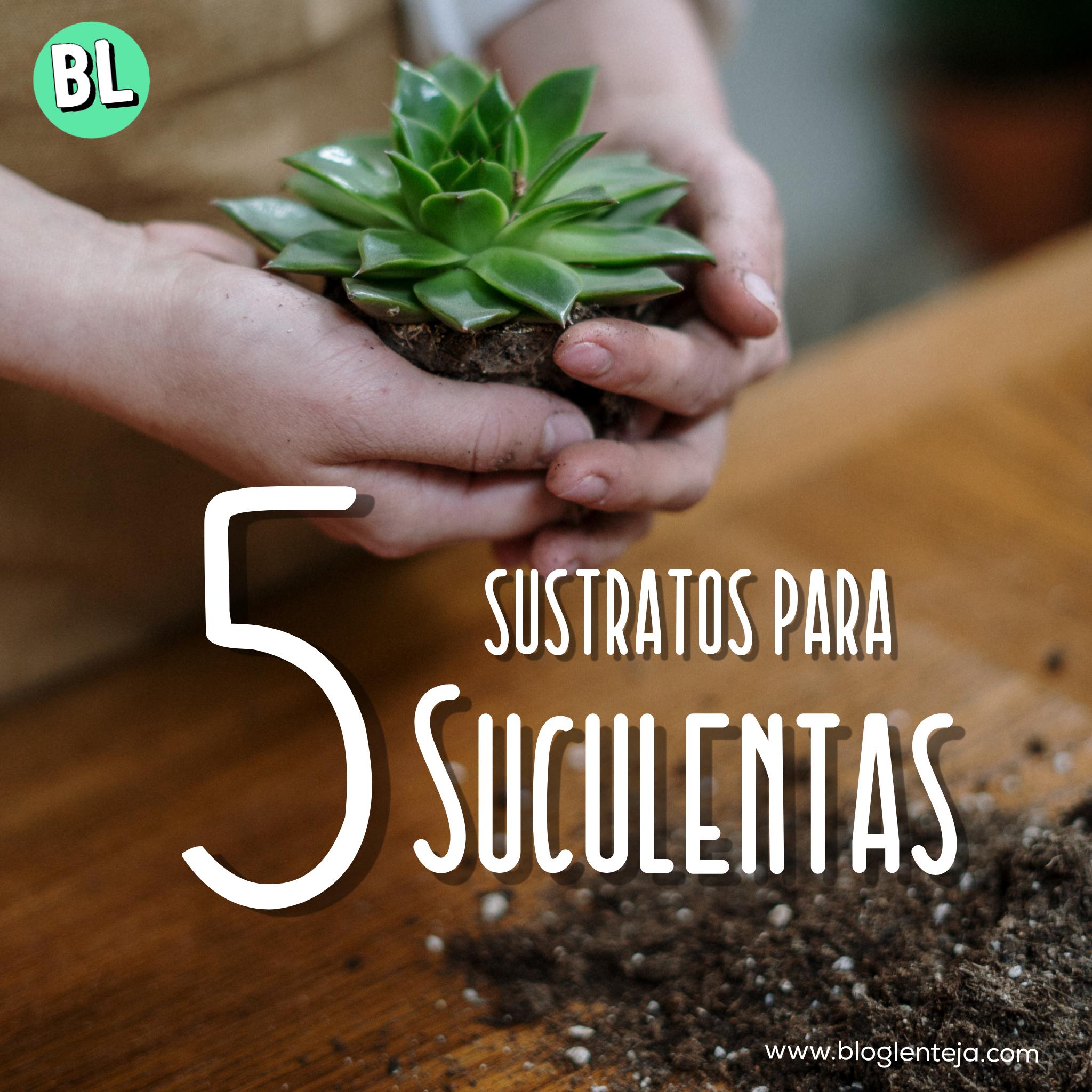 5 sustratos para Suculentas