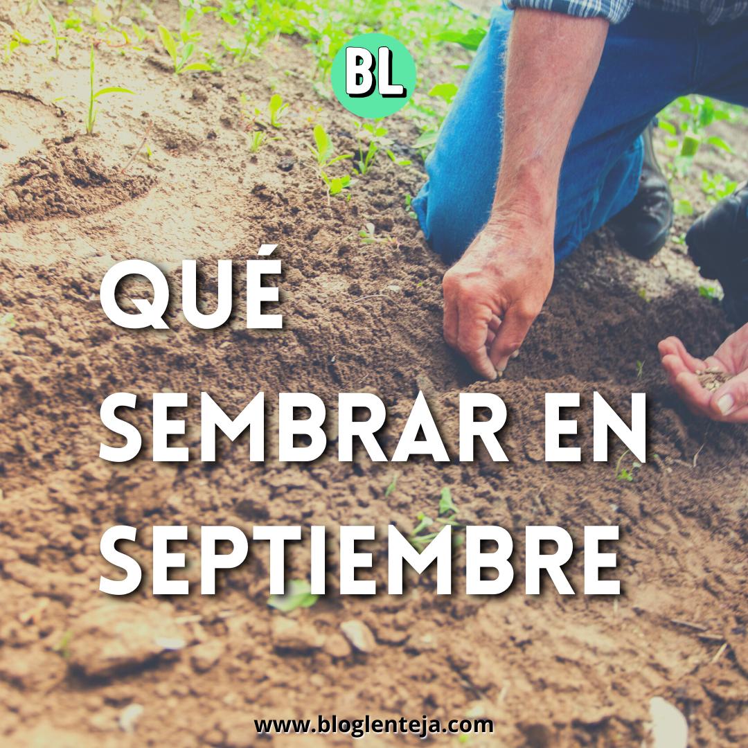 ¿Qué sembrar en Septiembre?
