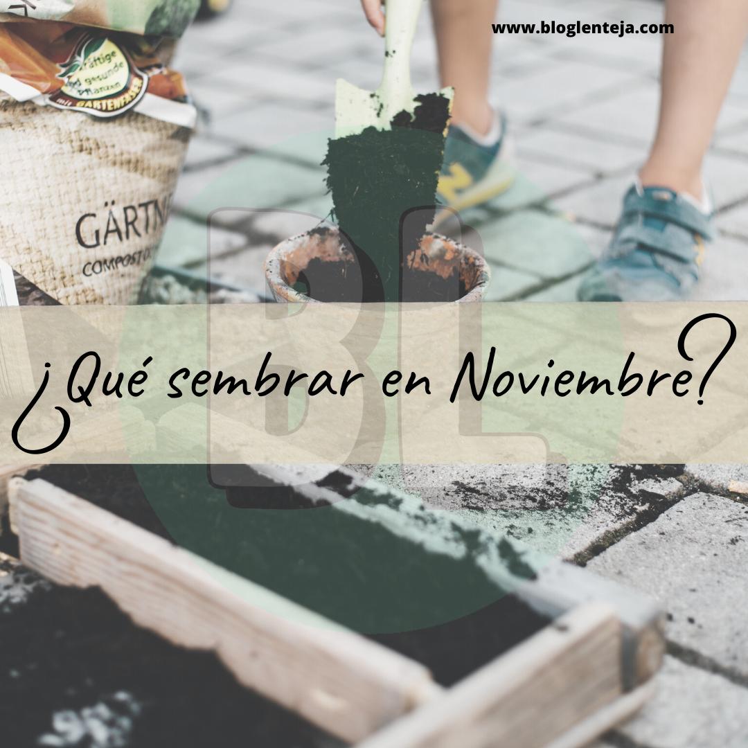 ¿Qué sembrar en Noviembre?