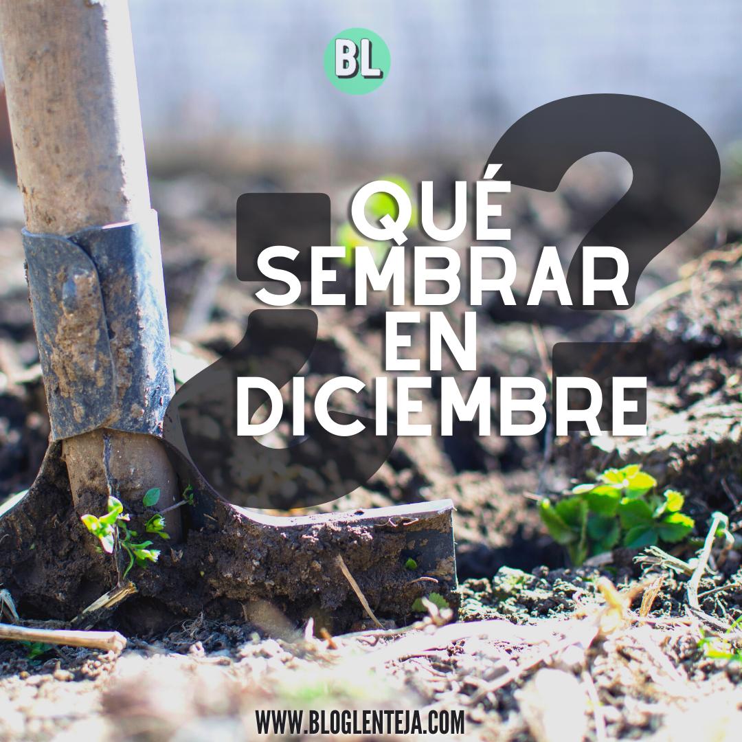 ¿Qué sembrar en diciembre?